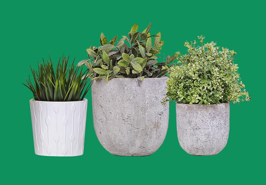 2CG-CLPH-AW19-Plants-S4-051119