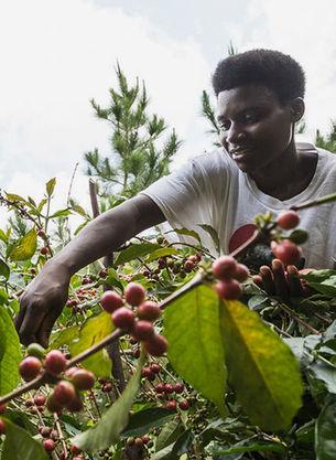 4CG_S3_Coffee_Uganda_230119_wl